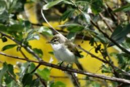 Birding en Sierra de Béjar